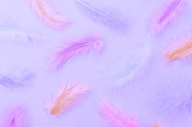 Flat lay pattern made of pastel colored feathers. minimal natural flat lay top view on light blue background.