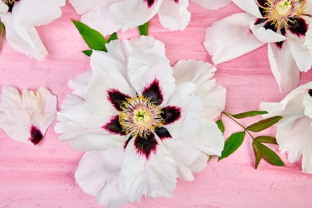 ピンクの背景に白のフラットレイパターン。