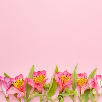 Flat lay pink alstroemeria with copy-space