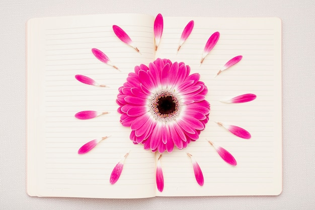 Flat lay pink daisy on notebook