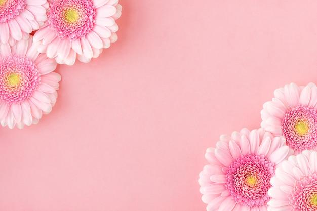 Flat lay of pink flowers gerberas, copy space