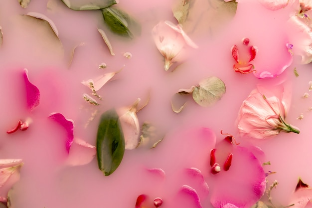 Flat lay pink flowers in pink colored water
