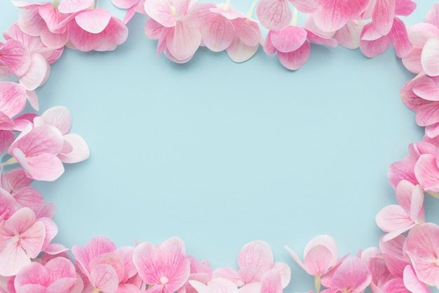 Flat lay pink hydrangea flowers frame