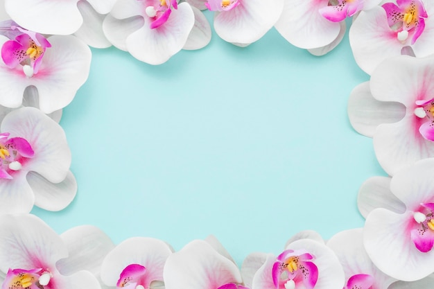Flat lay pink orchids frame