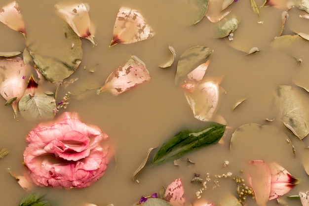 Flat lay pink rose in brown colored water