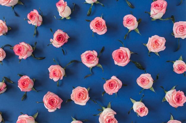 평평하다 핑크 장미 꽃 봉 오리와 나뭇잎 패턴 파랑