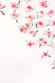 평평하다 핑크 장미 꽃 봉 오리와 잎 패턴 화이트