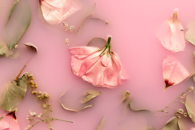 Flat lay pink roses in pink colored water