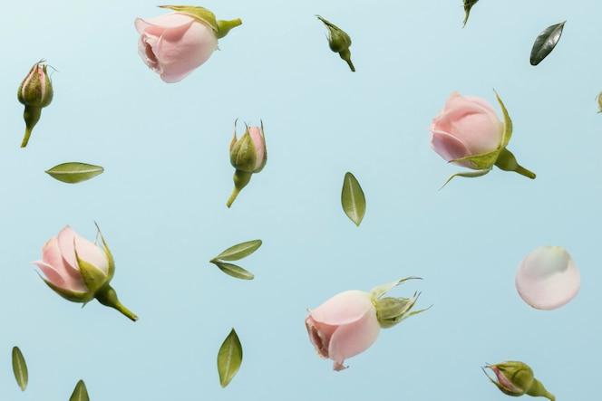 Flat lay of pink spring roses