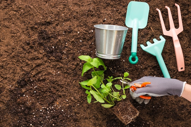 Flat lay of plant and garden tools with copyspace