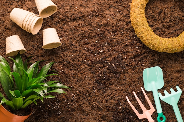 Flat lay of plant and gardening tools with copyspace