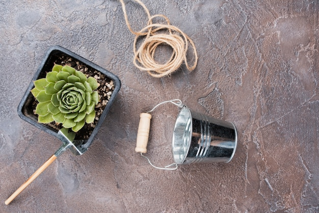 Flat lay of plant and gardening tools