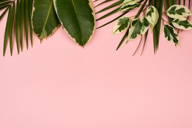 Lay piatto di foglie di piante con copia spazio