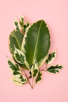 Flat lay of plant leaves
