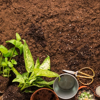 Flat lay of plants and gardening tools with copyspace