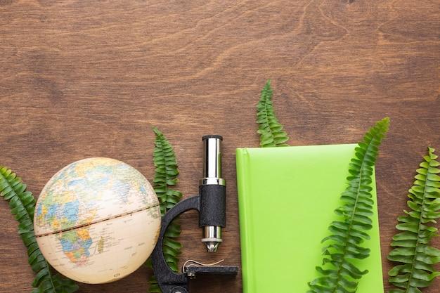 Flat lay plants and study items arrangement
