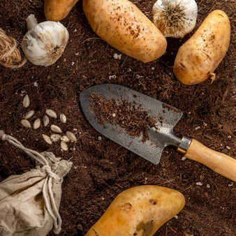 Flat lay of potatoes with garlic and garden tool