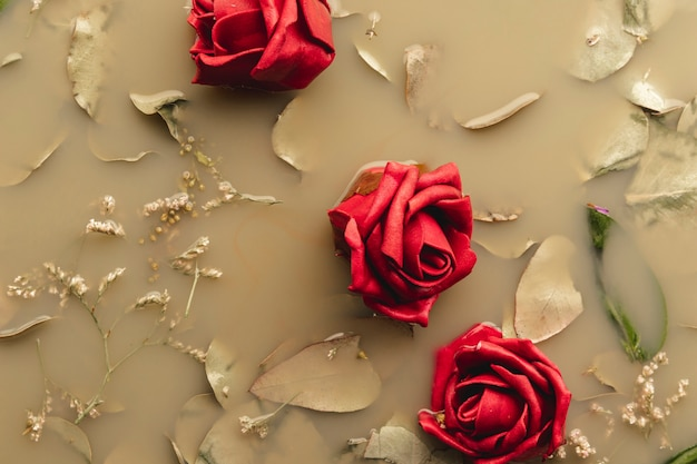 Flat lay red roses in brown colored water