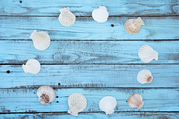 Flat lay round seashells frame on wooden board