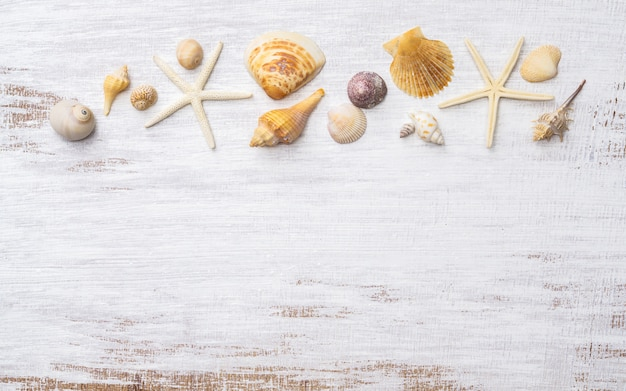 Flat lay of sea shells and starfish on grunge white wooden background.