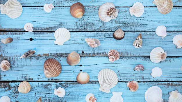 Flat lay seashells on wooden board