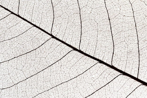 Flat lay of see-through leaves texture