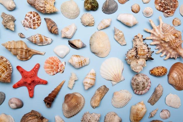 フラットは、青色の背景にさまざまな形やサイズのシェルを置きます。夏、海、休暇の背景