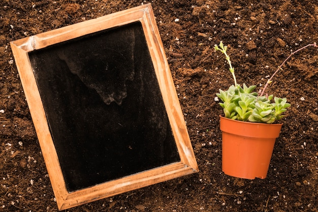 Flat lay of slate next to plant