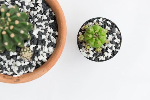 フラットは、白で隔離される植木鉢に小さなサボテンを置く