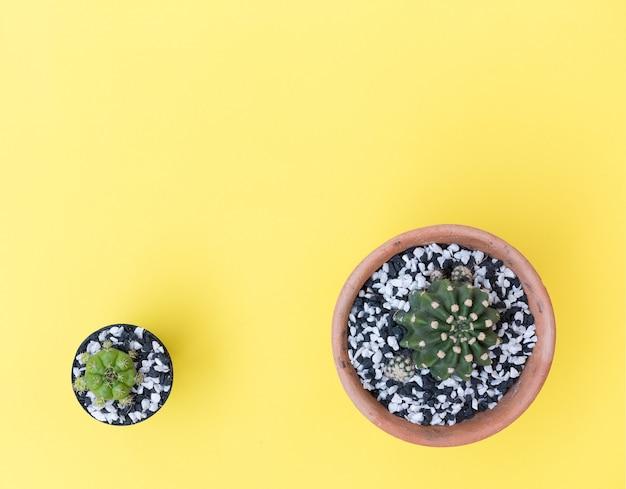 平らな黄色の背景に植木鉢に小さなサボテンを置く