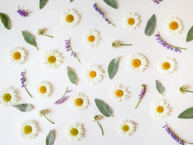 Плоские кладут весенние и летние полевые цветы на белом фоне. шаблон цветов. вид сверху