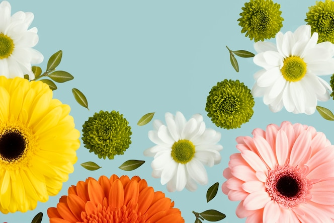 Flat lay of spring daisies and gerberas