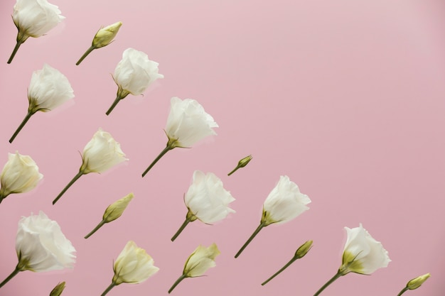 Flat lay of spring roses with copy space