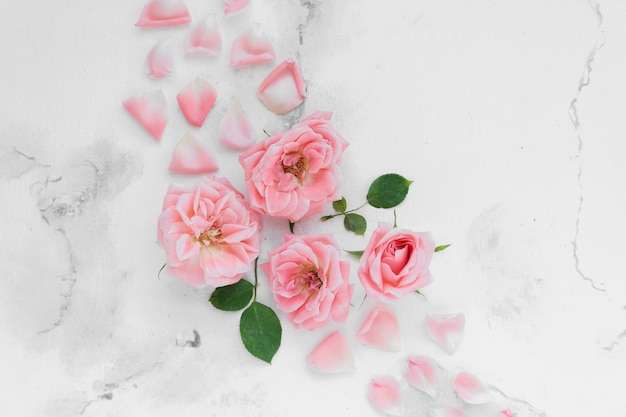 Flat lay of spring roses with petals and marble background
