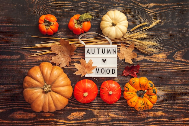 Плоская планировка натюрморт осеннее настроение. тыквы, хурма, колосья пшеницы, кленовые листья и лайтбокс на коричневом деревянном фоне