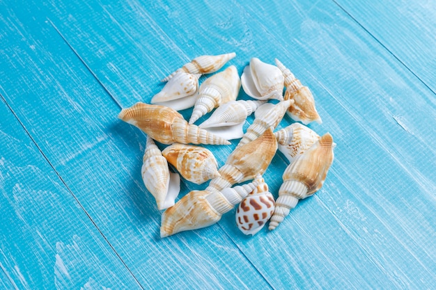 Flat lay summer composition with sea shells