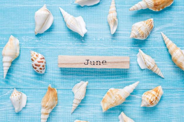 海の貝殻を持つフラット横たわっていた夏の組成