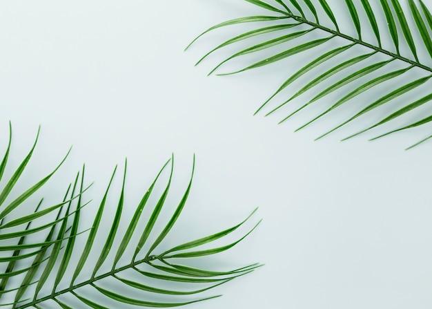 Lay piatto di foglie sottili