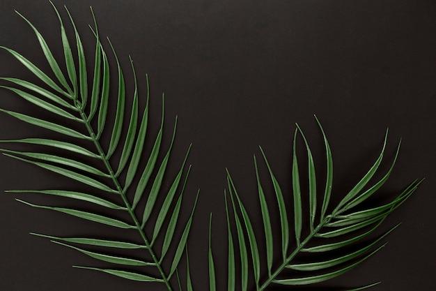 Lay piatto di foglie di piante sottili