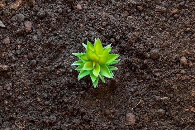 地面に小さな植物を置く