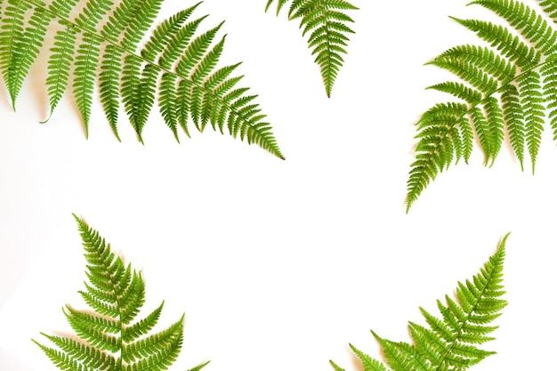 플랫 레이. 평면도. 흰색 배경에 고사리입니다. 복사 공간이 있는 식물과 꽃의 테마.