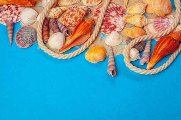 Flat lay. top view. frame of shells of various kinds on blue background