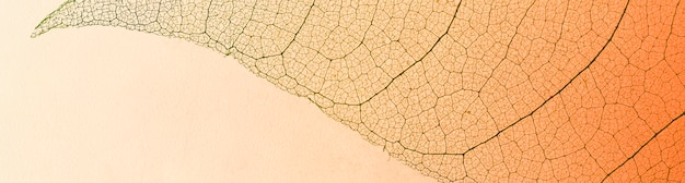 Lay piatto di texture foglia traslucida