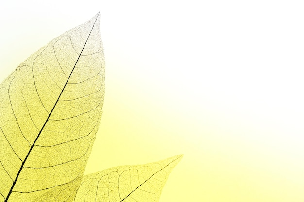 Flat lay of translucent leaves with colored hue