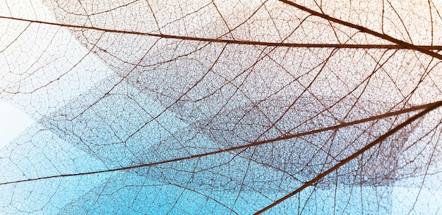 Flat lay of transparent leaves lamina texture