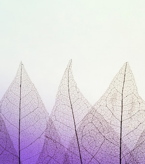 Flat lay of transparent leaves texture with colored hue and copy space