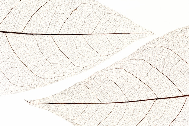 Flat lay of transparent leaves texture