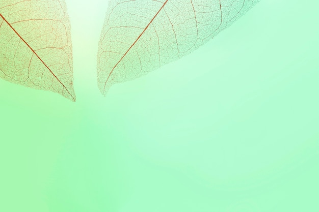 Flat lay of transparent leaves with multiple colors hue