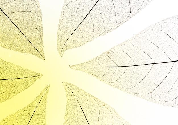 Lay piatto di foglie trasparenti