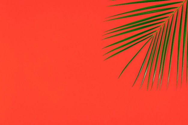 Flat lay on tropical leaf on pastel background